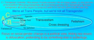 T political umbrella paradigm
